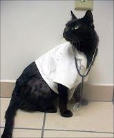 Un chat medecin.