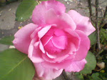 yo amo el rosa