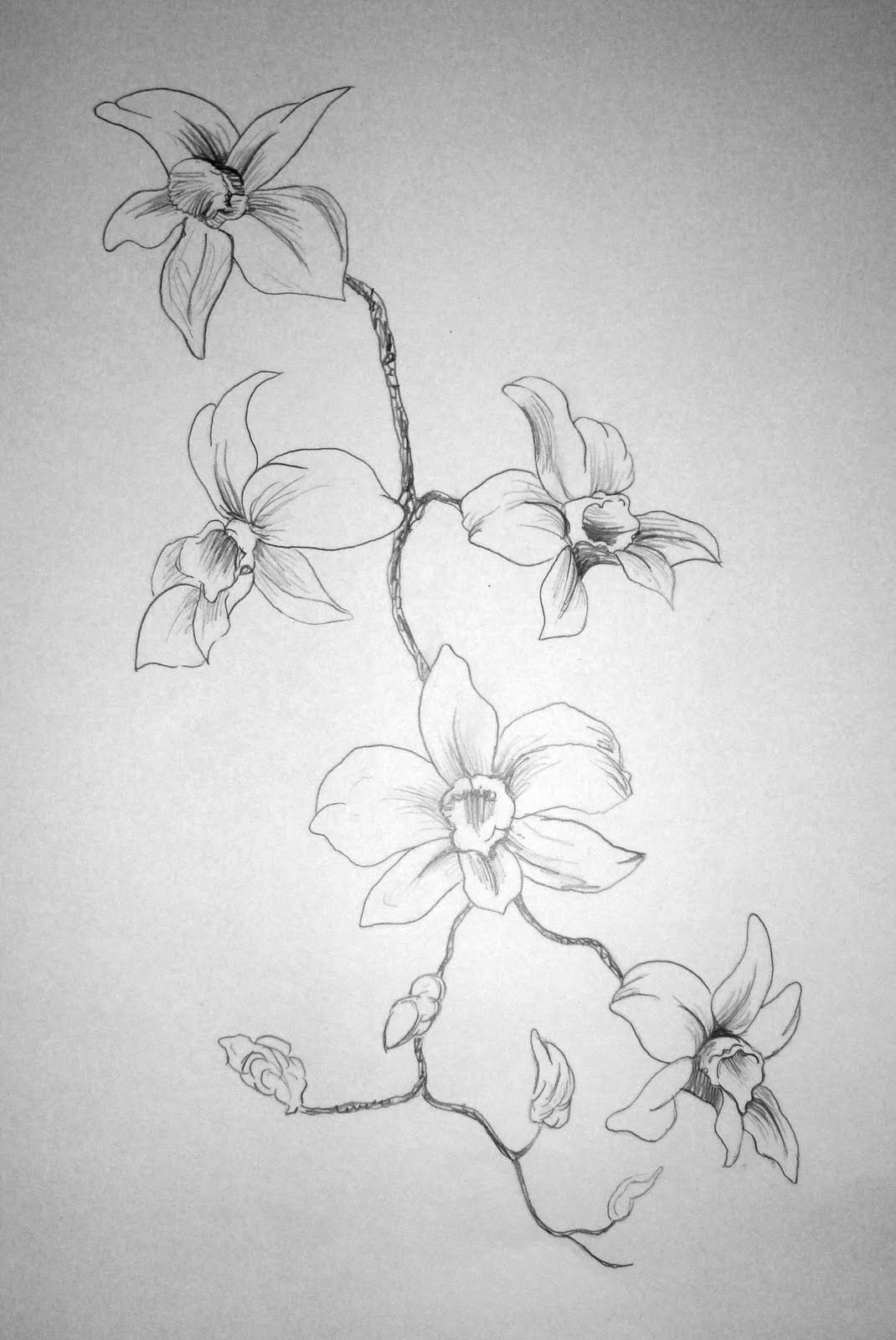Easy Drawings Of Flowers In Pencil Hidden Yesterda...