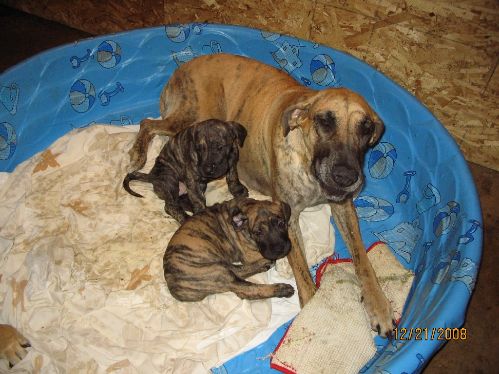 [Maddie+and+last+two+pups.aspx]