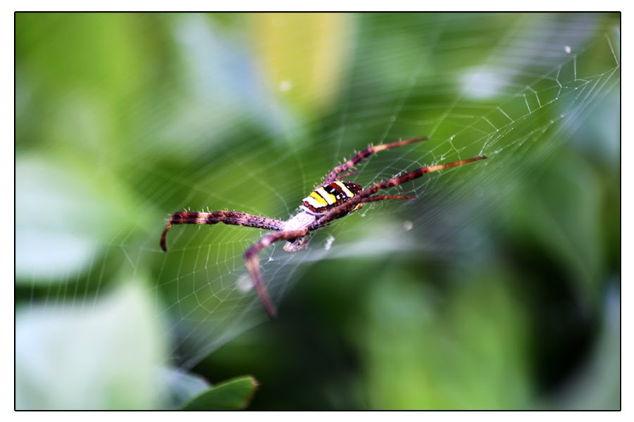 Hakeem Photography: spiders