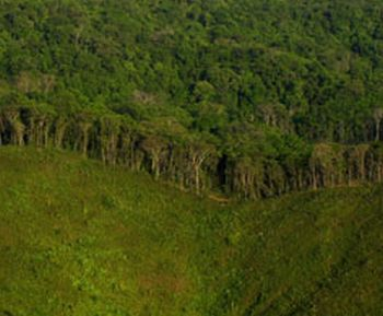 the importance of tropical rainforests and the effects of destroying them Rainforests around the world are continuously cut down  tropical rainforest waters are highly threatened  the effects from the degradation of these.