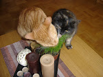 Kattgräs är SÅ gott!