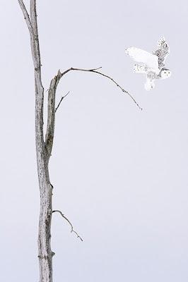 zdjęcia przyrody