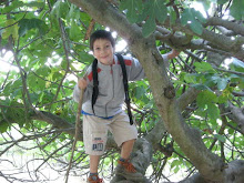 Climbing the Fig Tree
