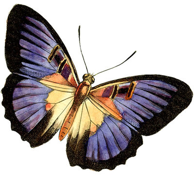animated butterfly clipart. Butterfly Clip Art Images