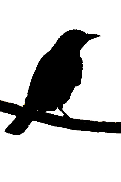 quail silhouette clip art - photo #18