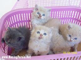 Kucing Pendamai