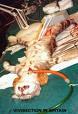 """La experimantación animal, un """"Daño colateral"""" Experimentacion"""