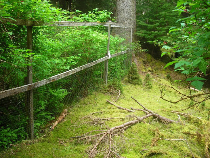 Deer exclosure in Pacific Northwest