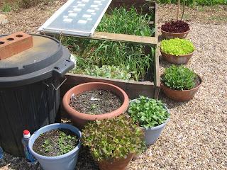 salad tubs