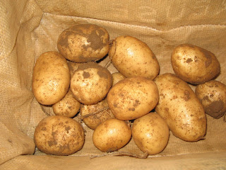 Maris Peer potatoes