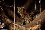 Encontros com a Vida Selvagem