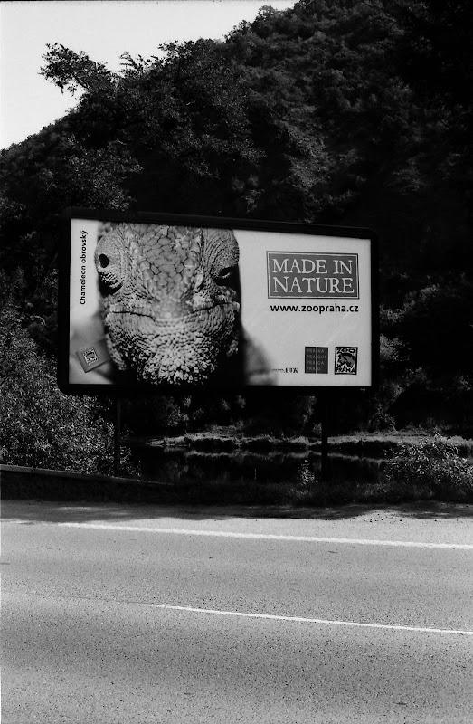 Prague - Chameleon, Made in nature Prague ZOO ad