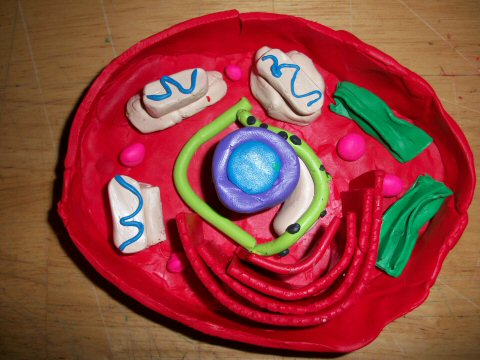 Plant Cells Made of Clay http://theharvesthome.blogspot.com/2010/04/animal-cell.html
