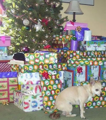 Dog Plays Santa