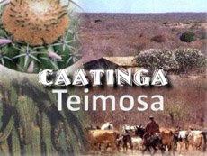 Caatinga Teimosa