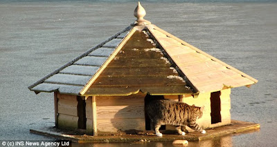 Floating Duck House Plans Free http://catdefender.blogspot.com/2011_03_01_archive.html
