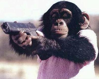 Este chimpancé siembra el pánico en Maryland