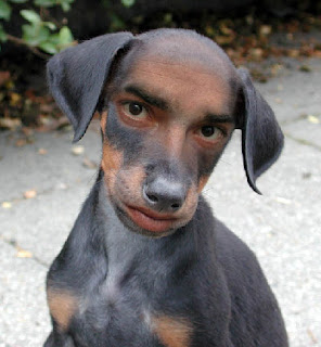 "Insolito : Abandonaron a un perrito por tener ""cara humana"