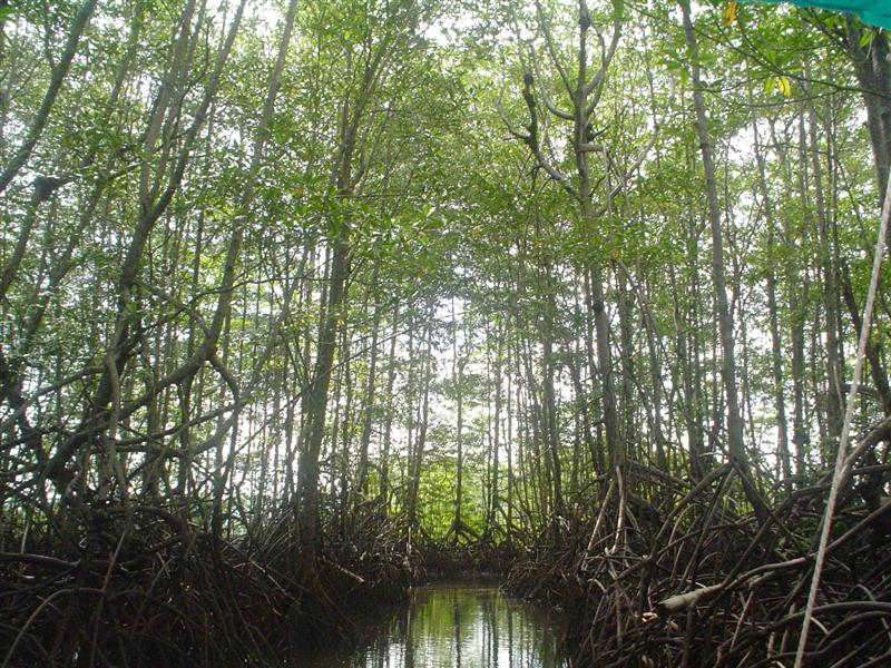 mangrove ecosystem Marine, estuarine, estuary, ecosystem nps photo florida bay, the largest body of water within everglades national park, contains more than 800 square miles (2,072 square kilometers) of marine bottom, much of which is covered by submerged vegetation.