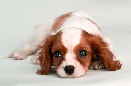 Cute Puppies Pictures on Cute Puppies