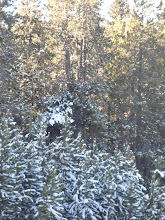 Snow Covered Trees - Dec 08, Laramie, Wyoming