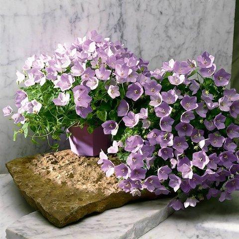Bukieciarnia - w zamyśle moim kwiaciarnia, rupieciarnia w pozytywnym tego słowa znaczeniu,