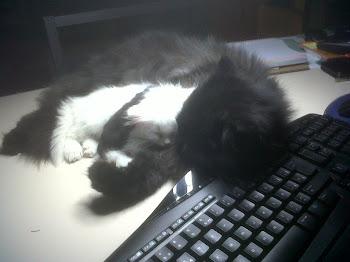 Mis gaticos :)