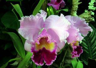 Un zinnia flor de color lila — Foto stock © ekarina #31669993 - Flores De Color Lila Fotos