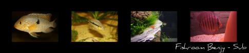 Fishroom Benjy-Sub