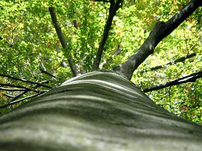 Le réchauffement climatique doperait la croissance des arbres