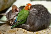 Paz entre os animais