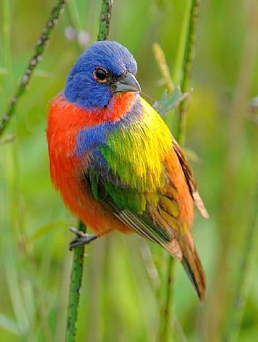 Arcoiris de mil colores las mascotas for De mil colores
