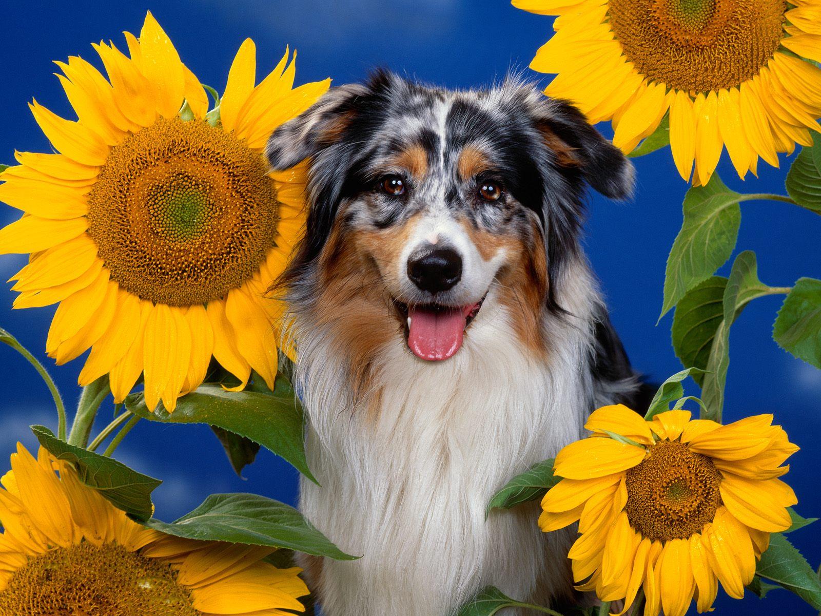 http://3.bp.blogspot.com/_m1Z6uxpmlU8/TSXmNijqUeI/AAAAAAAADCk/4h5DeVXldIs/s1600/animal_0037.jpg
