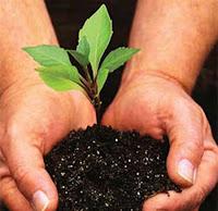 Народные приметы о растениях