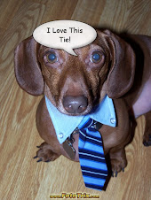 Dachshund Wearing A Tie