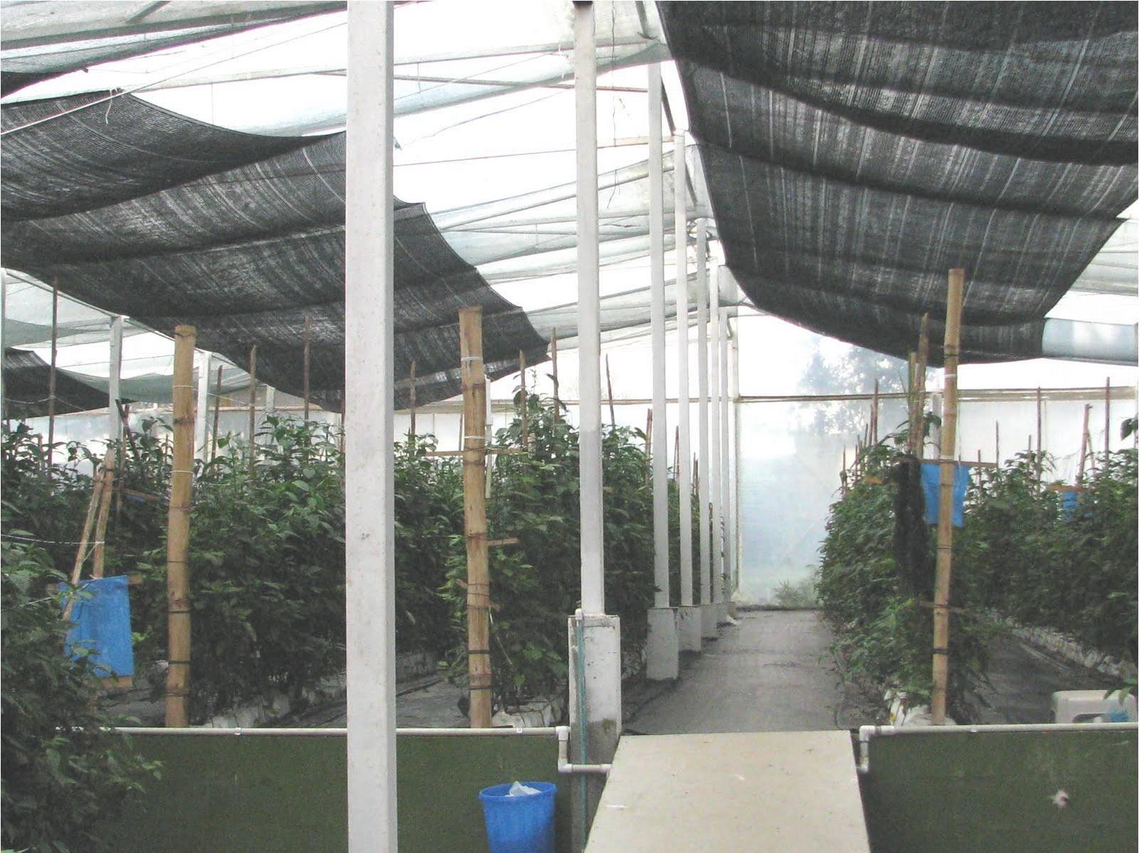 Hidroponia en el jard n agosto 2010 for Plantas para invernadero