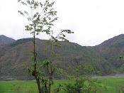 Didal a beautiful village of Shangla