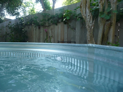 Modern blossom stock tank pool - How to filter a stock tank swimming pool ...