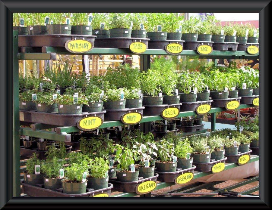 Fresh Herbs Amp Vegetables Cactus Joe S Las Vegas Nursery
