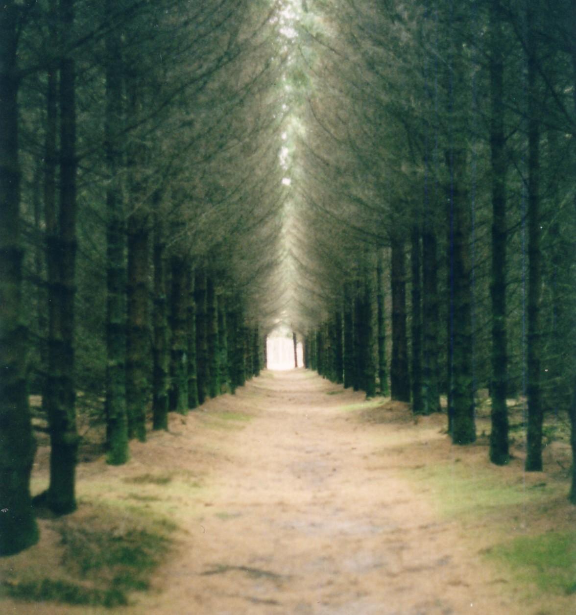 http://3.bp.blogspot.com/_m7OFa1tCKWE/TSMGBCSOrnI/AAAAAAAAADc/tP7zMik3wC0/s1600/tree-lined-path1.jpg