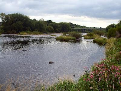 Just west of Ovingham Bridge