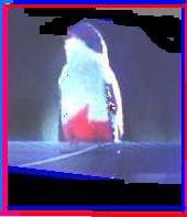 """Premio """"A liberar el Tocororo"""