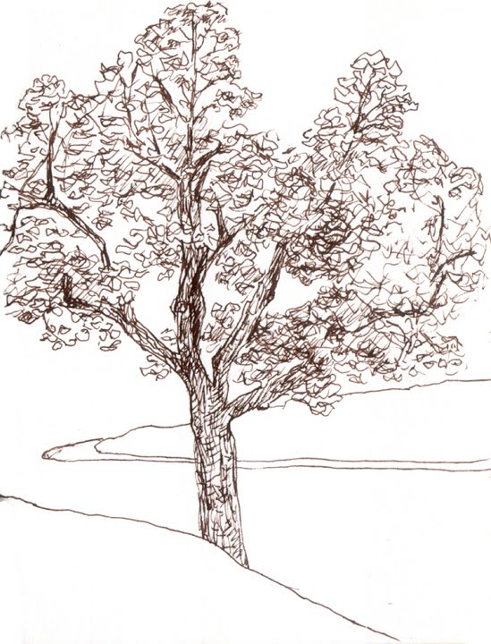 Orange explains it all: tree sketches