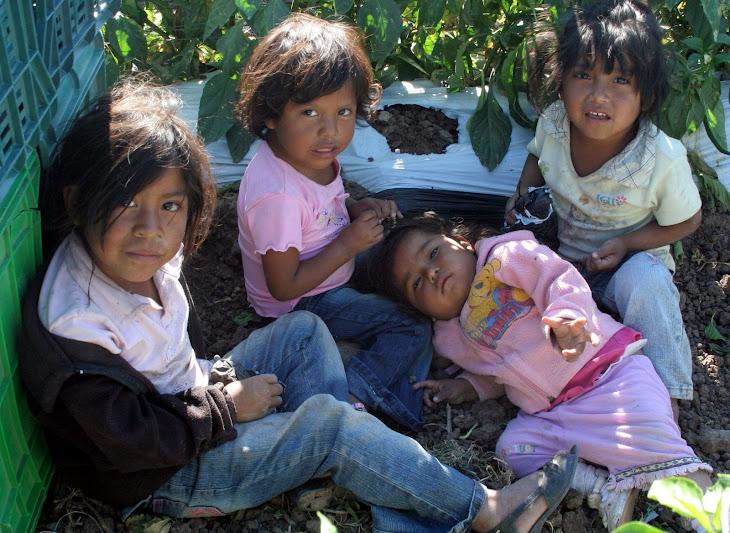 Niños pobres de la Ciudad de Culiacán