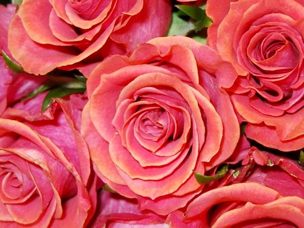 Stellina events a pretty color palette perfect for - Rosas color coral ...