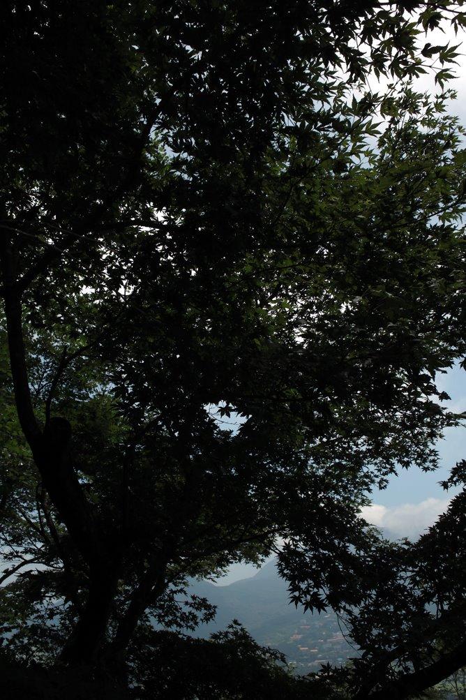 [見晴らしてい樹木SDIM2397.jpg]