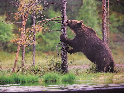 We miss the beautiful canadian rockies and its wildlife already east