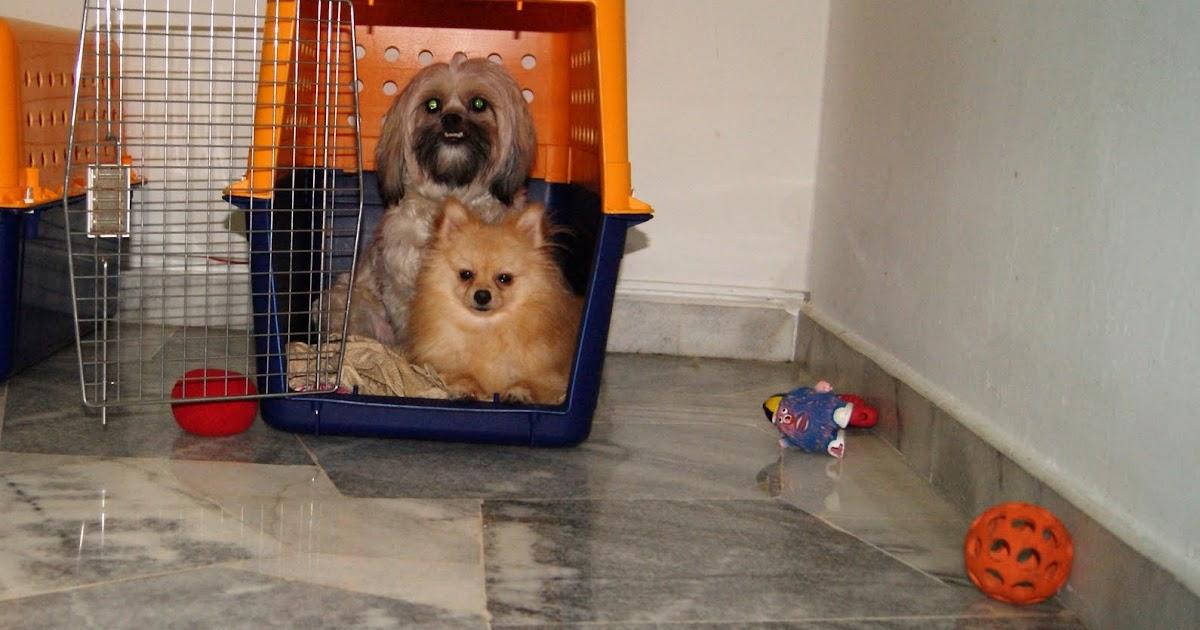 HAPPY FURRY HOUSE: Chuck(Shih Tzu) & Harley(Pomeranian)